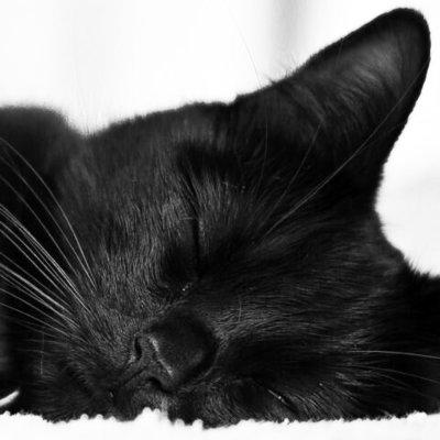 Kittykat8