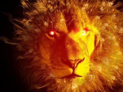 Lionxcash