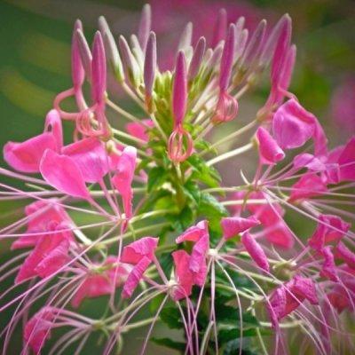 Flower_gold